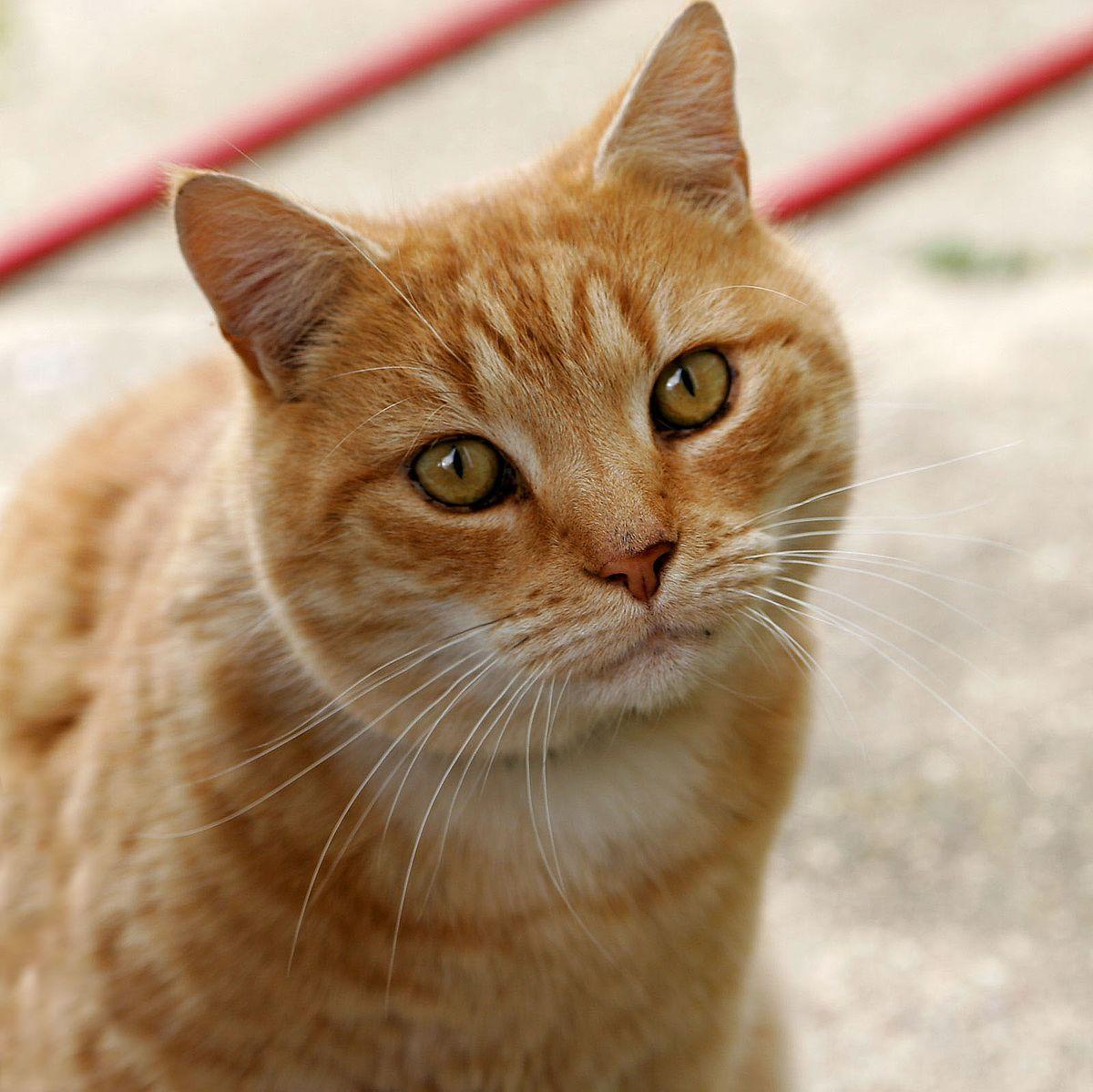 Mysterious Cat Behaviors